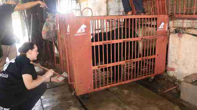 Rescued bear in transport crate