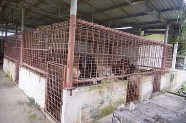 Bears trapped in cages at a bile farm
