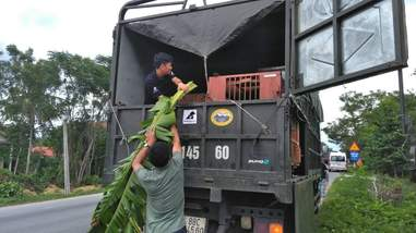 Rescuers driving crated bears to sanctuary