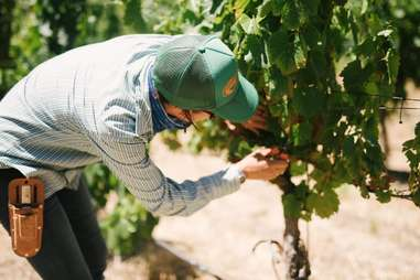 Halter Ranch Vineyards