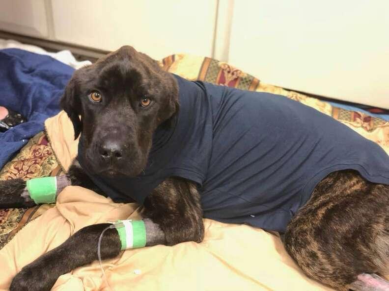Champ at the vet in South Carolina