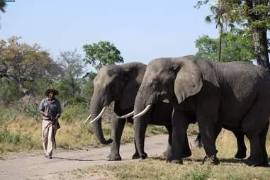 elephant poach africa