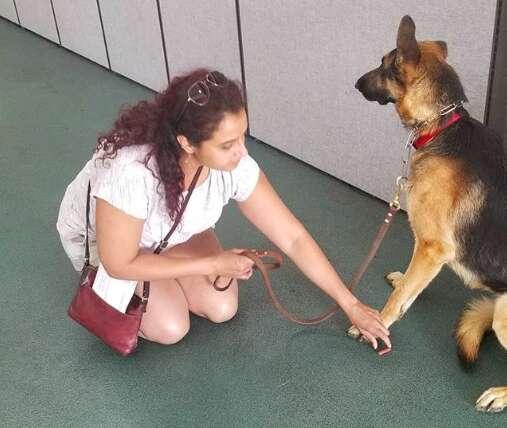 dog rescue german shepherd shelter