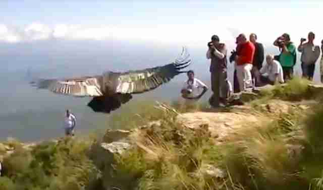 "Condor ""thanks"" rescuers before flying back to the wild"