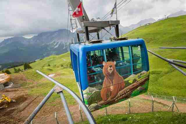 Ex-circus bear being transferred to sanctuary in the Swiss Alps