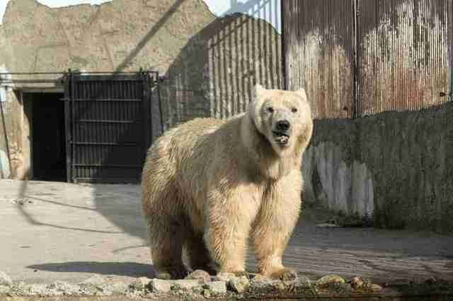 Rescued circus bear