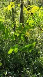 Swampland in Zebulon, North Carolina