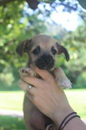 Nash the little puppy found in swamp