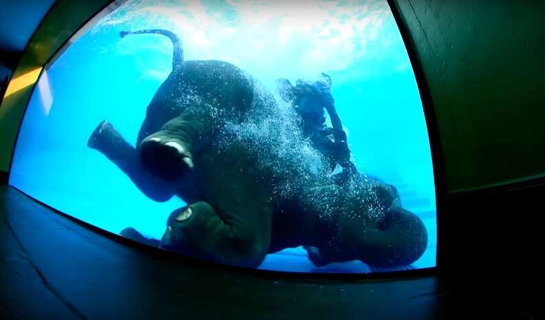 elephant tank swimming