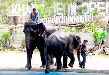 thailand elephant zoo