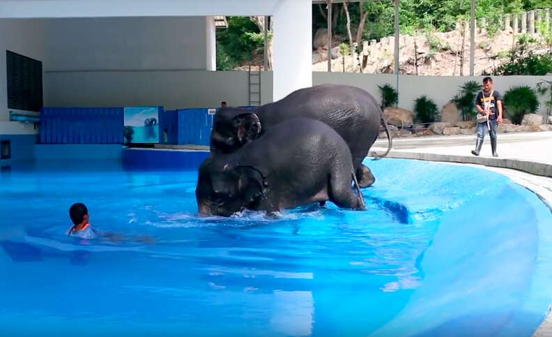 elephant bull hook training