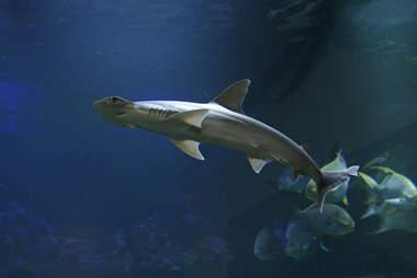 plant eating sharks