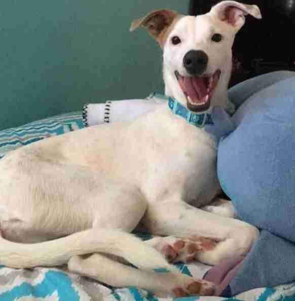 Uto the street dog smiles after getting adopted