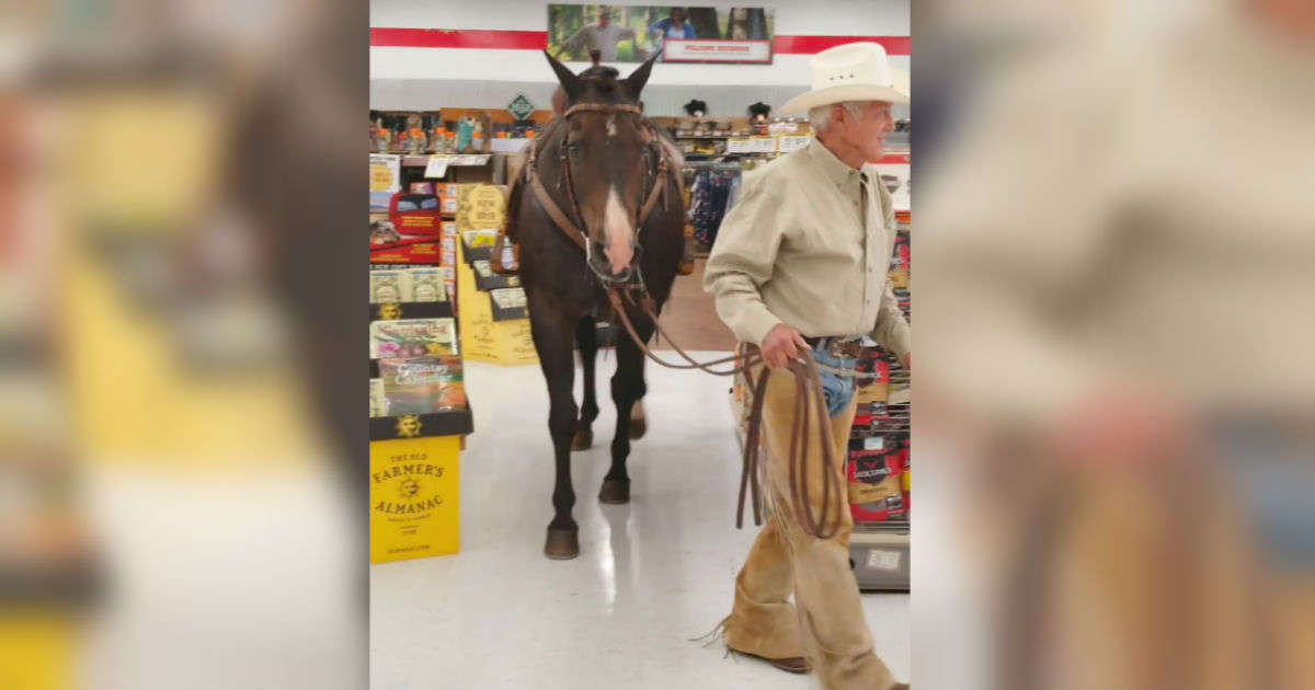 6b31e6d93ede Man Hears Leashed Pets Are Allowed In Store — So He Brings His Horse