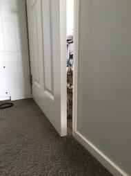 cat opens doors