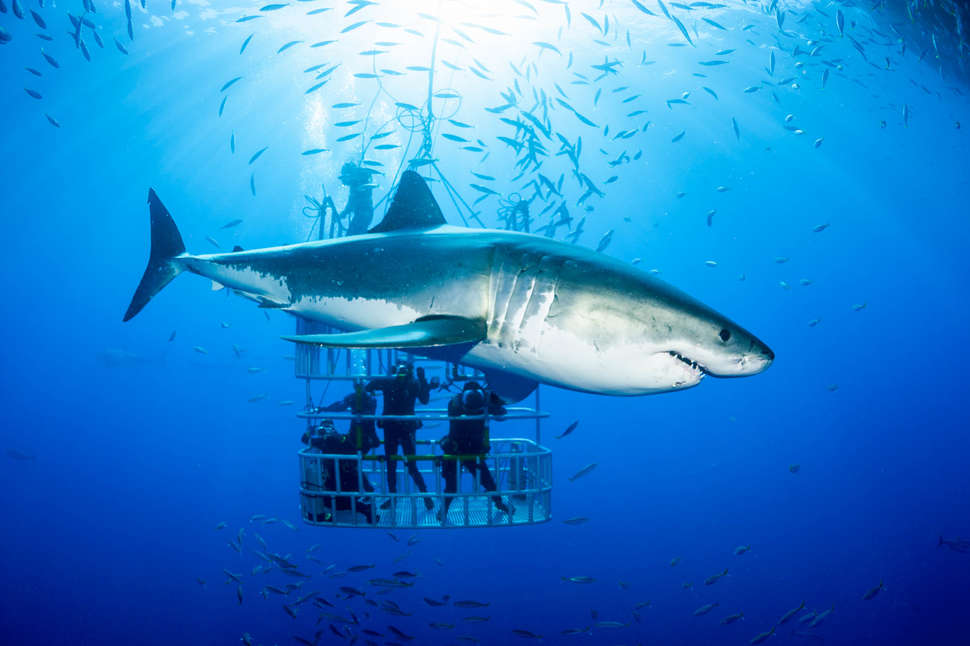 Best Places to Swim With Sharks Around the World
