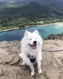 dog goes hiking for the first time