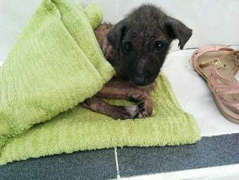 Ika the puppy heals at Maëlle Girard's house in Bali