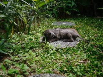 Abandoned puppy hides in grass in Bali