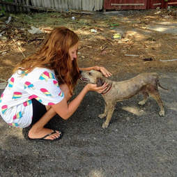 Dobbie, the stray balinese dog, gets pets