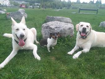 Molly with her two rescue dog siblings