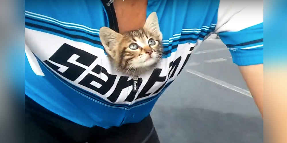 Cyclist Finds A Stranded Kitten — And Carries Her To Safety In His Shirt