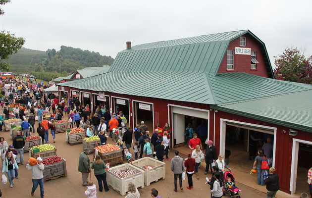 The Best Places to Go Apple Picking in Virginia