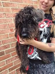 Oreo the senior dog found tied to a pole in a Richmond, Virginia neighborhood