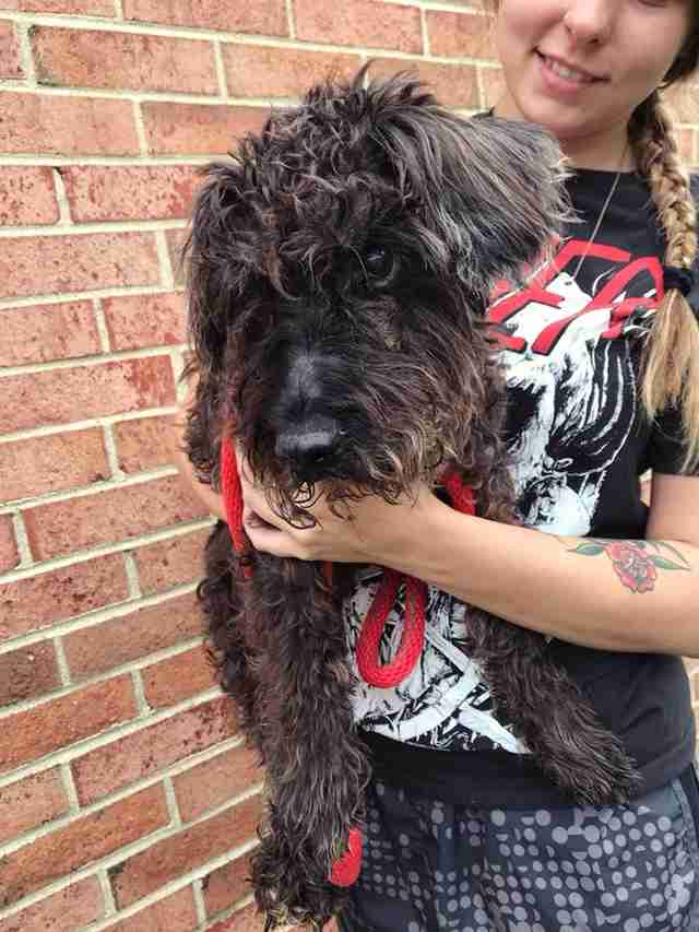 Oreo the senior dog found tied to a pole in a Richmond, Virginia neighborhood