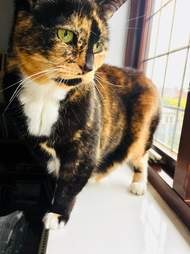 cat at shelter for 200 days
