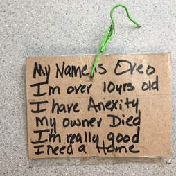 A note tied to Oreo the dog's collar