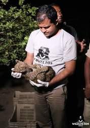 Vet holding leopard cub