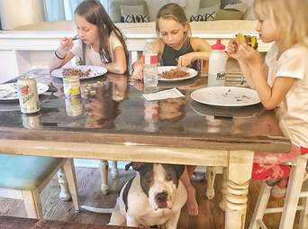 duke dog north carolina begging for food