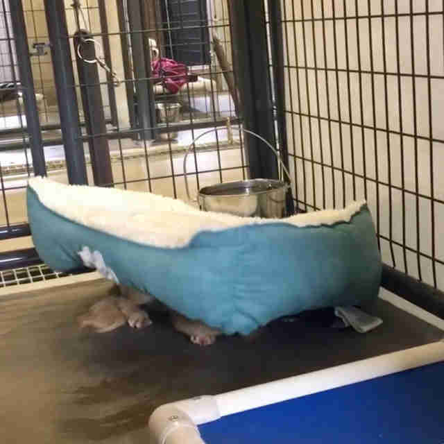 Shelter dogs hiding beneath their beds
