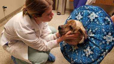 Vet comforting dog in clinic