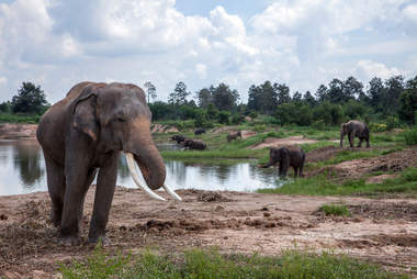 Elephant skin trade