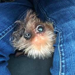 one eyed three legged dog