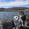 cat and dog hiking together