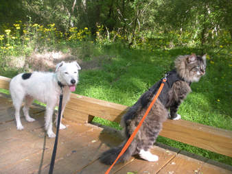 dog and cat go hiking together