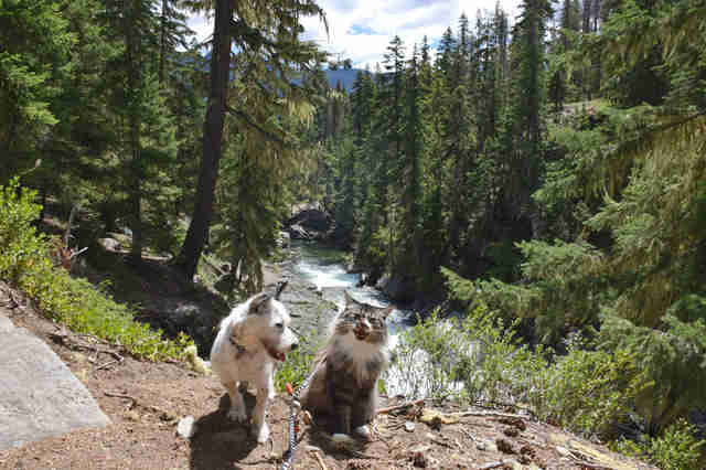 cat and dog go hiking together