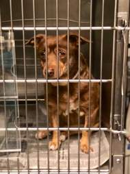 Dog with sad looking eyes inside kennel