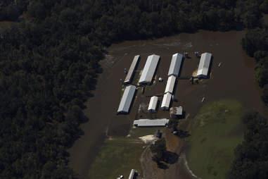 Flooded pig farm in North Carolina