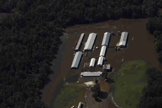 Flooded pig farm in North Carolina