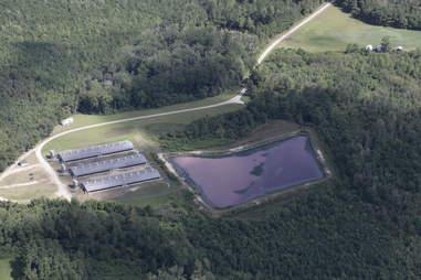 Pig farm before Hurricane Florence