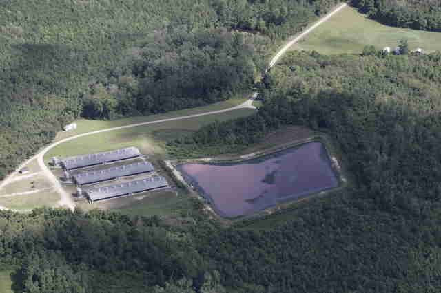 Pig farm before Hurricane Florence