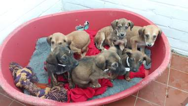 six puppies abandoned outside pet hospital