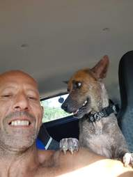 Dog standing on shoulders of man in car