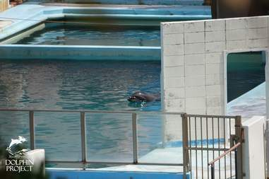 Dolphin trapped inside pool at abandoned park