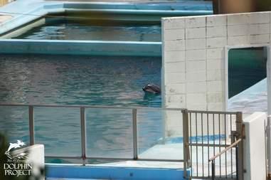 Captive dolphin at abandoned marine park
