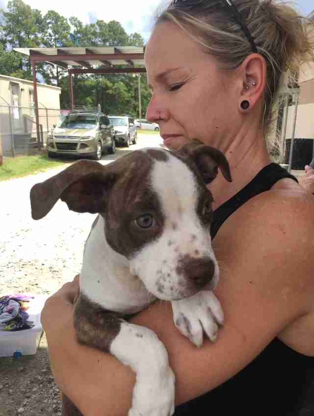 Stranded shelter dog saved from Hurricane Florence